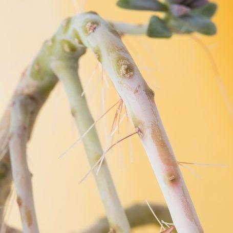 roots on stem