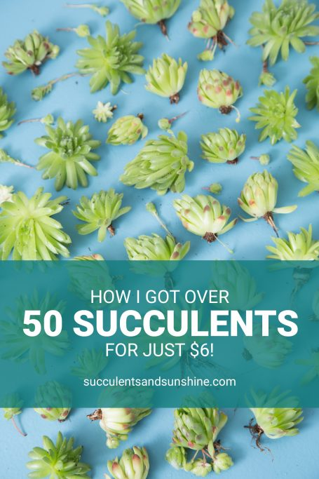 get the best value by getting a lot of succulents in one pot