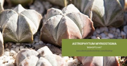 Astrophytum myriostigma 'Bishop's Hat' care and propagation information
