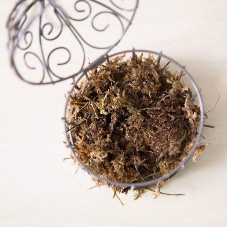 add sphagnum moss mini bird cage succulent garden