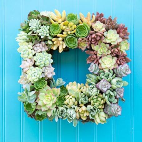 after succulent wreath