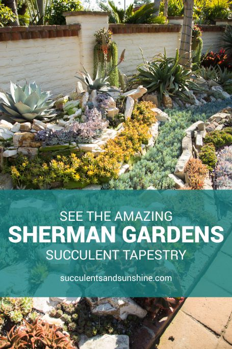 amazing sherman gardens succulent tapestry