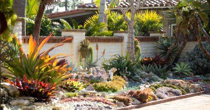 beautiful succulents sherman garden