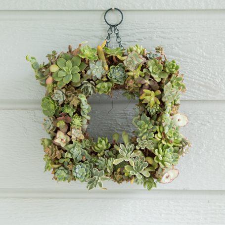 before succulent wreath