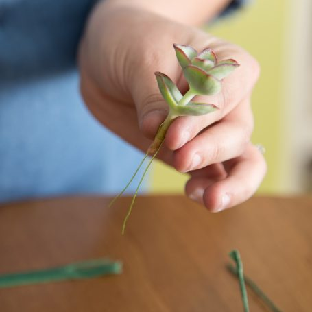 bend wire around succulent stem to use for boutonniere diy