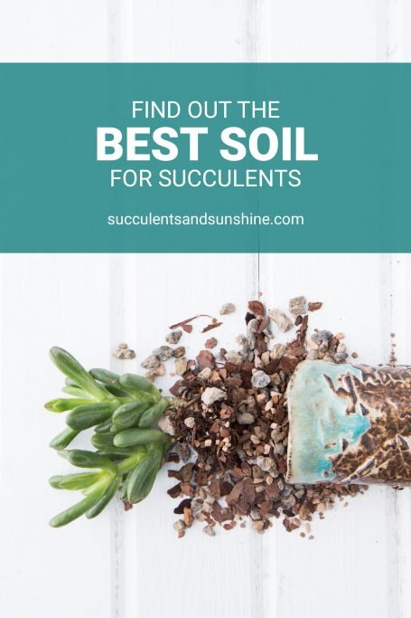 best soil for potted succulents well draining gritty mix