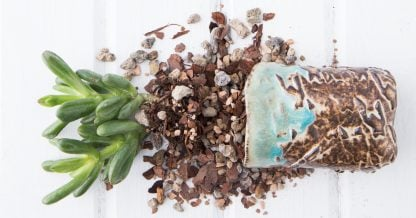 gritty succulent soil mix best well draining large particles