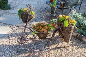 bicycle yard decor succulents