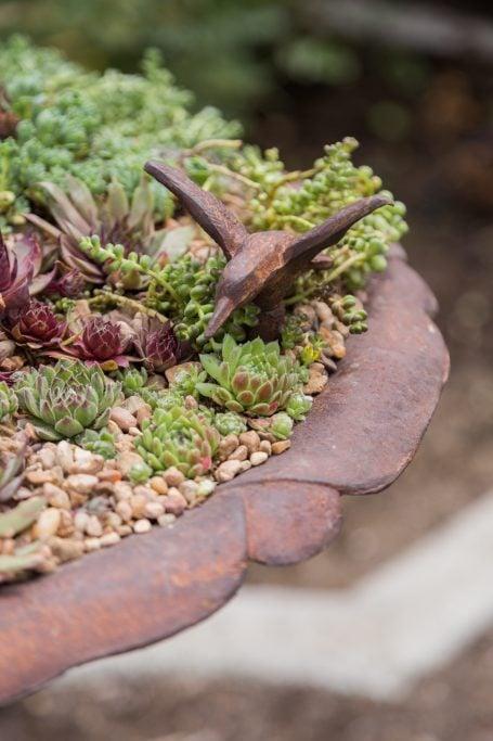 cast iron bird bath succulent planter sedum sempervivum