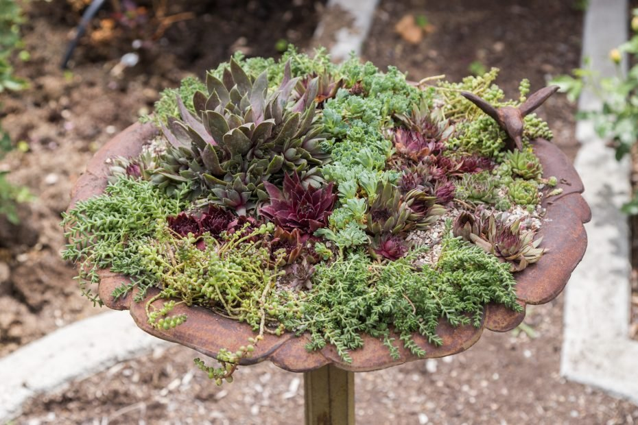 hens and chicks cold hardy succulents bird bath planter tutorial