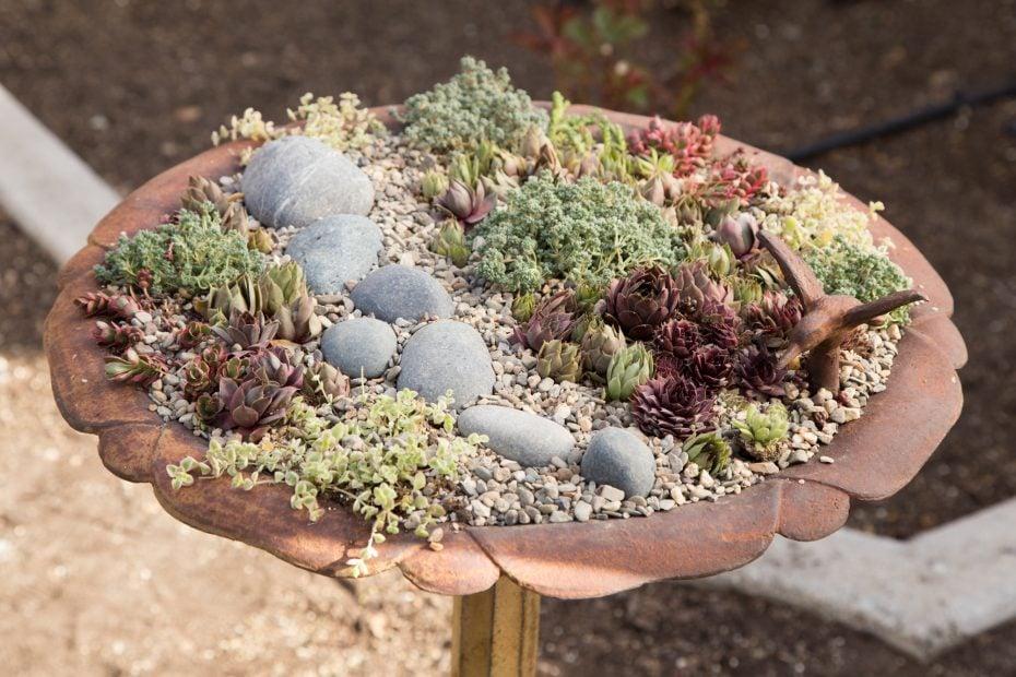 bird bath planter filled with sempervivums sedums rocks