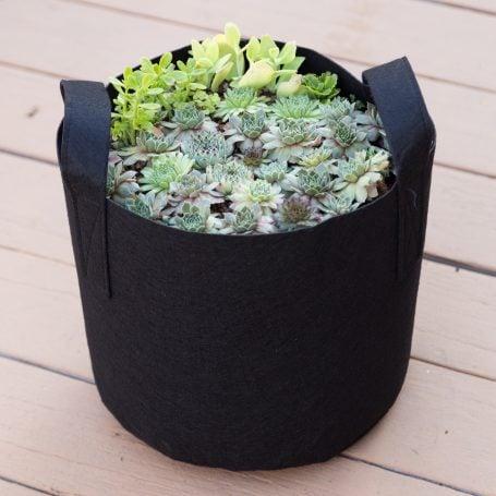 black planter handles moving succulents sempervivums