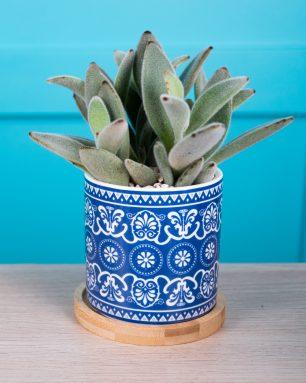 blue design succulent pot