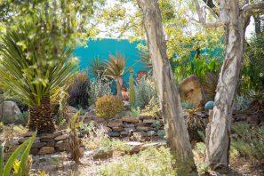 blue wall in succulent garden