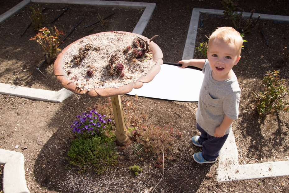 boy with succulent bird bath planter