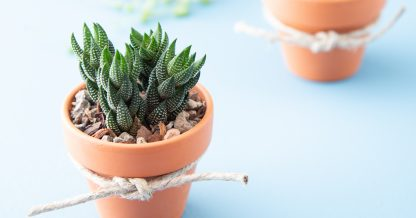 where to buy succulents wedding favors cuttings bouquet diy