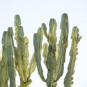 cactus sherman gardens