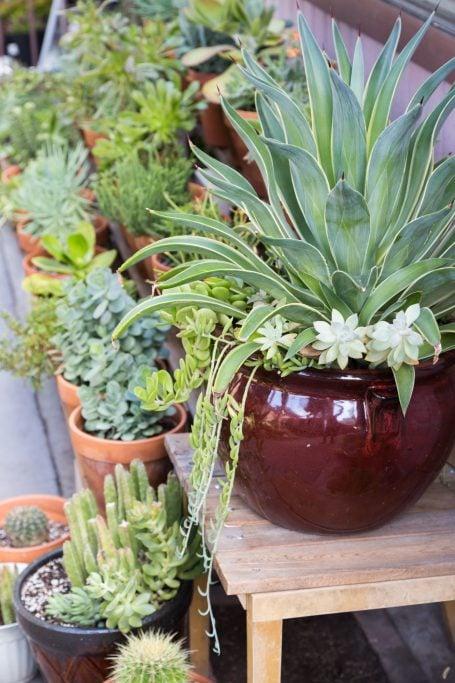 agave kalanchoe aeonium senecio succulents ceramic terra cotta pottery