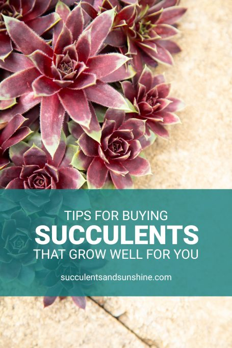 how to determine what succulents you should buy