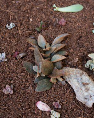 coconut coir soil for succulents