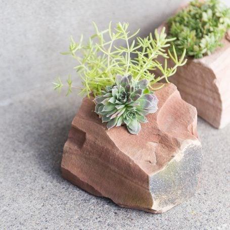 sedum sempervivum in planter made from rock