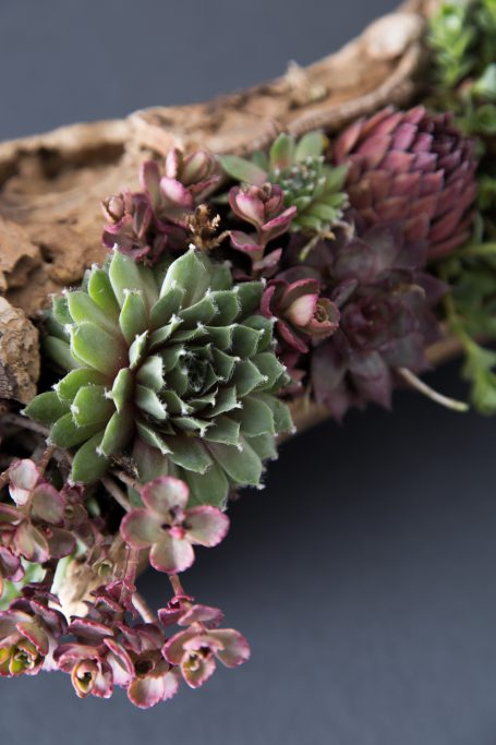 cold hardy succulents sempervivum sedum wood planter
