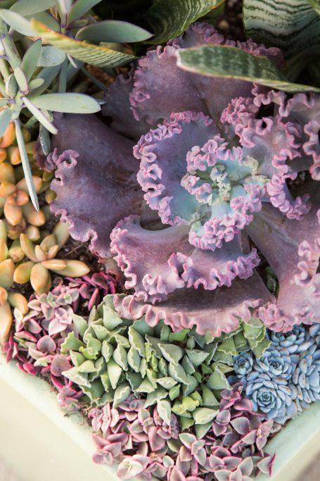 colorful succulent arrangement blue green purple orange
