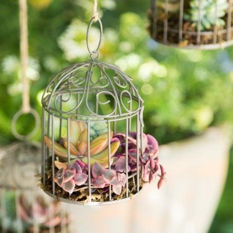 completed succulent arragnement birdcage
