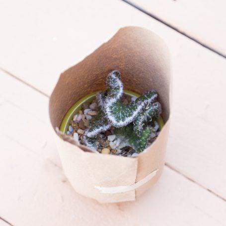 craft paper around cactus