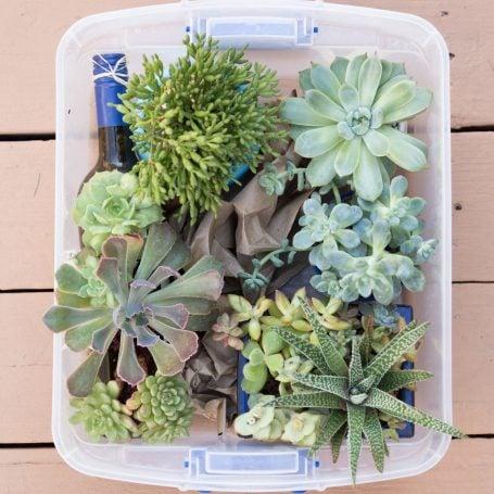 craft paper succulents tub