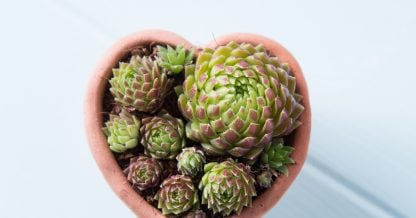 create a tiny garden with succulents