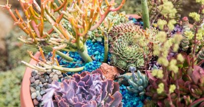 create an under the sea arrangement with succulents