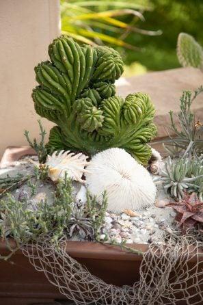 crested cactus sand dollar