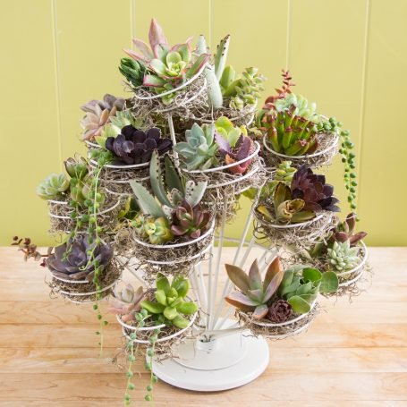 colorful succulent cuttings wire cupcake stand