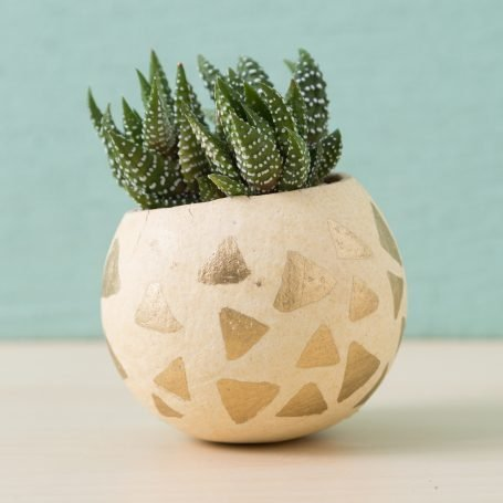 triangle gold pen painted bell cup succulent planter haworthiopsis