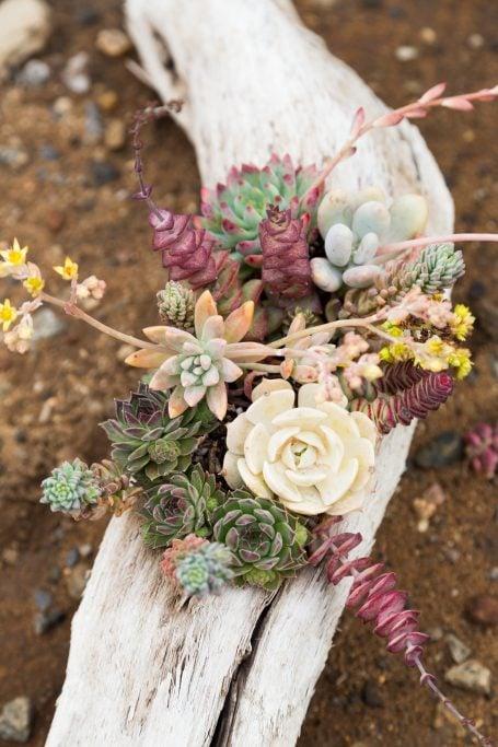 driftwood planter filled with succulents echeveria sempervivum crassula pachyphytum