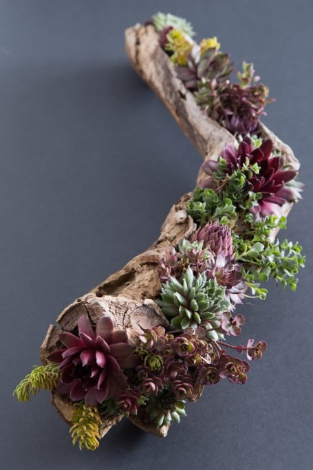 red green purple yellow succulents in driftwood planter