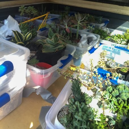 duct tape succulent planters truck moving