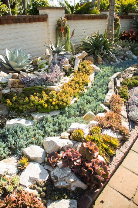 echeveria aloe sedum succulents sherman gardens