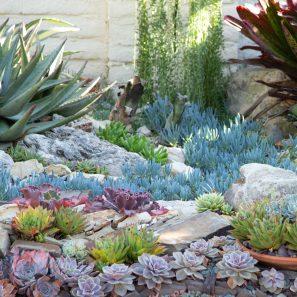 echeverias senecios aloes sherman gardens