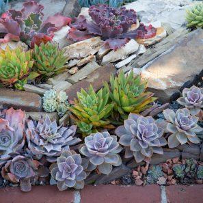 echeverias sherman gardens