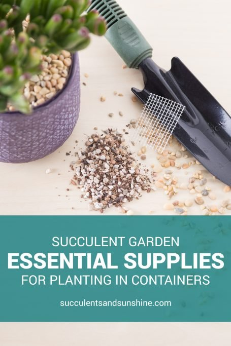 essential supplies planting succulent container garden