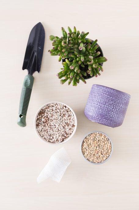 essential supplies succulent planter garden spade soil pot