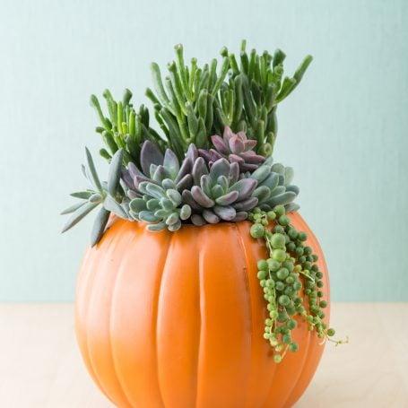 fake pumpkin succulent planter fall