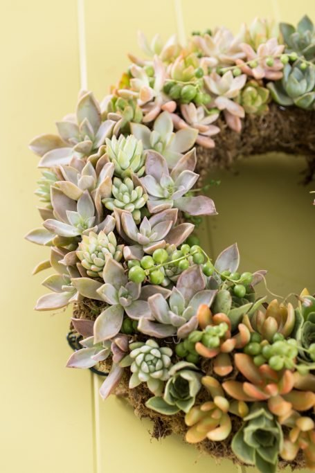 finished succulent wreath fred ives