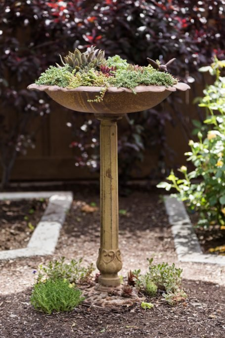 finished bird bath succulent planter sempervivums sedums cold hardy
