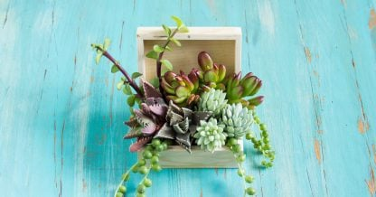wooden box filled with succulent cuttings