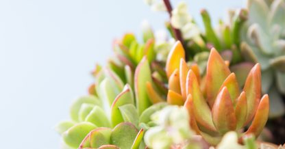 give succulents