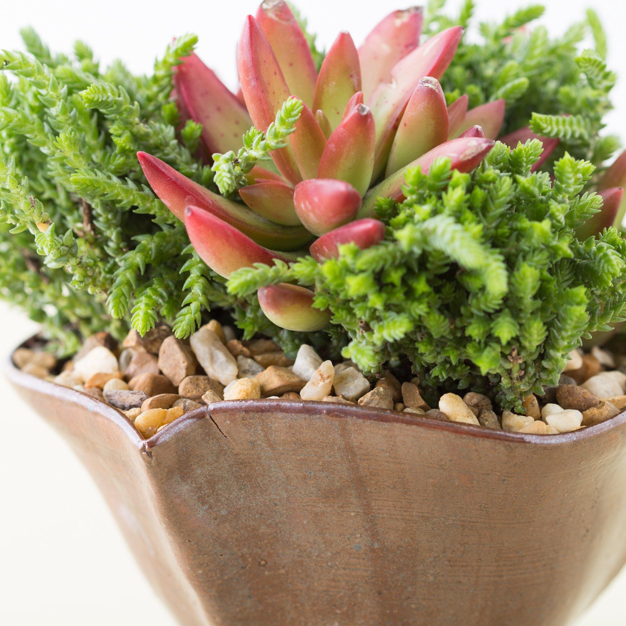 gold rock top dressing succulents