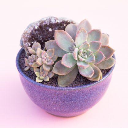 graptosedum ghosty purple pot